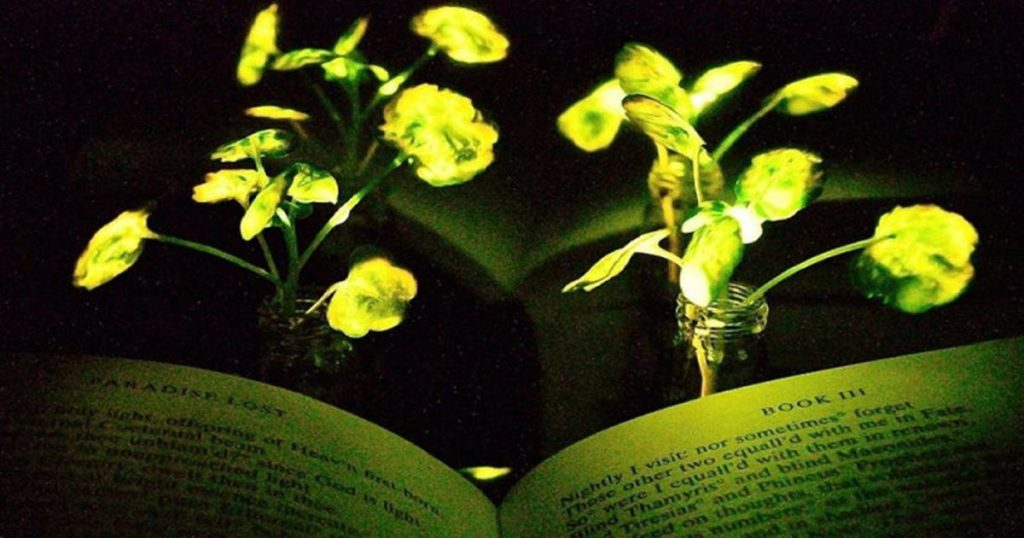 MIT researchers came up with the idea to replace lighting with ... plants
